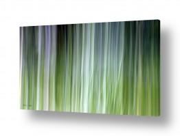תמונות לפי נושאים ירוק בהיר | צבעי חורף 3