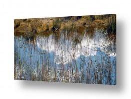 תמונות לפי נושאים שלולית | שמיים במים 1