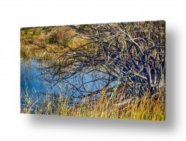 תמונות לפי נושאים שלולית | שמיים במים 2