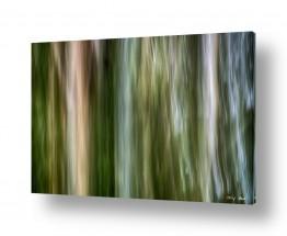 צילומים מופשט | ביער ראש העין 1