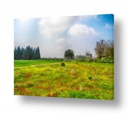 תמונות לפי נושאים נגב | נגב ירוק ופורח
