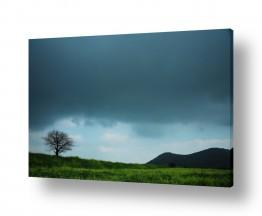 צילומים מזג-אוויר | העץ הבודד