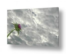 פרחים לבנים לבן | עננות כבדה