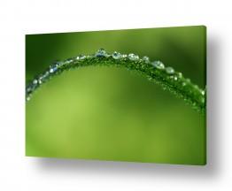 צילומים צילום תקריב | יהלומים בטבע