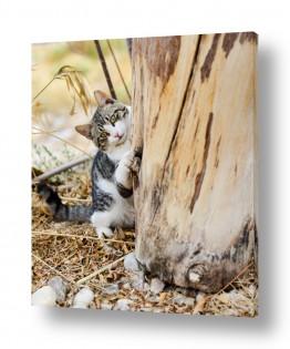 חיות בית חתולים | משחקים