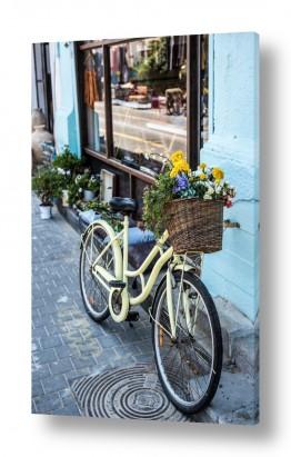 תמונות לפי נושאים אורבני | אופניים פרחוניות