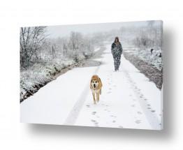 צילומים מזג-אוויר | טיול בשלג