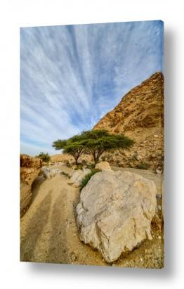 חיות בר דב | צמד במדבר