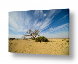 צילומים טבע | ציור בשמיים