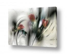 פרחים טוליפ | 3 צבעונים