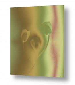 תמונות לפי נושאים דימיוני | 3 צבעונים