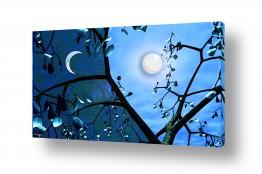 אסטרונומיה ירח | יום ולילה