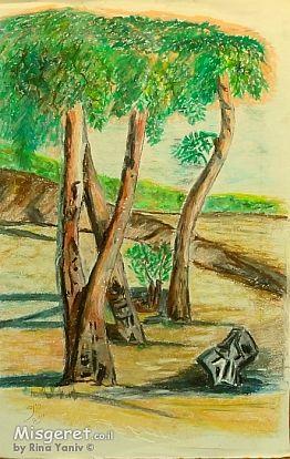 עצי האקליפטוס