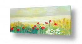 פרחים פרגים | פרגים בשדה השבולים