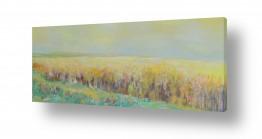 שדות חיטה | שיבולים שיבולים בחמה