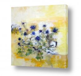 פרחים גבעולים | קיפודן פורח בעמק יזרעאל