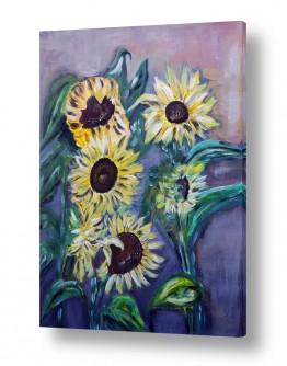 פרחים גבעולים | חמניות