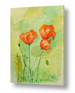 ציורים ציור בצבעי מים | פרגים בשדה