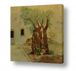 טבע דומם חלונות | פינה בירושלים