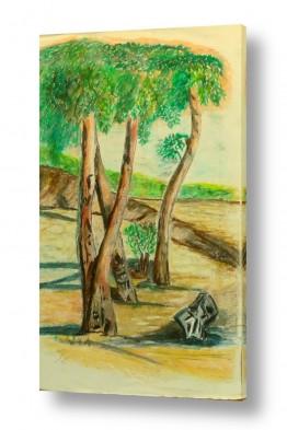 תמונות לפי נושאים אקליפטוס | עצי האקליפטוס