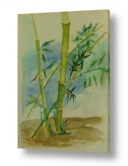 ציורים ציור בצבעי מים | במבוק
