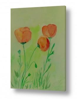 ציורים ציור בצבעי מים | פרחי שדה 2