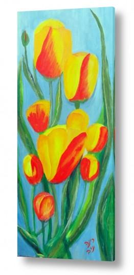 פרחים טוליפ | היופי שבטבע