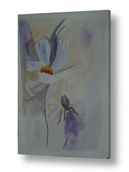 צמחים פרחים | הפרח בלבן