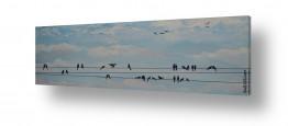 ציורים רוני רות פלמר | ציפורים על חוט חשמל