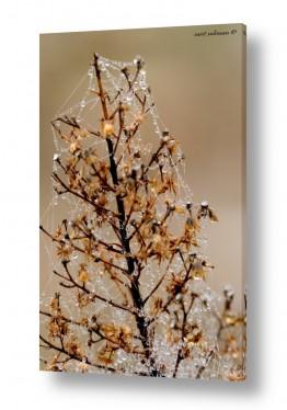 צבעים פופולארים צבע חימר | עץ חג המולד