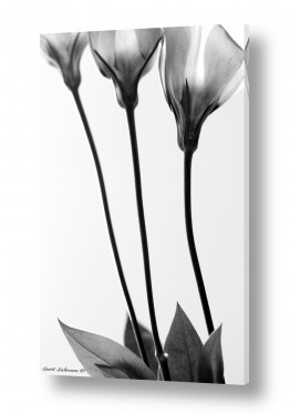 תמונות לפינות ישיבה | 3 שחור לבן