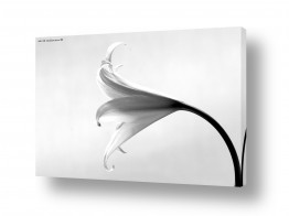 צילומים צילום תקריב | שחור ולבן