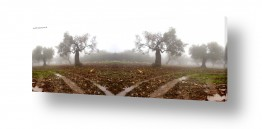 צילומים שרית סלימן | ערפל בכרמל