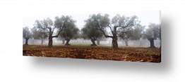 צילומים תמונות נוף פנורמי | ערפל בכרמל