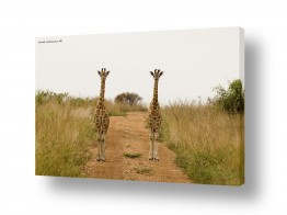 תמונות לפי נושאים זוגיות | דוגמניות מאפריקה