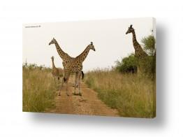 עולם אפריקה | דוגמניות מאפריקה