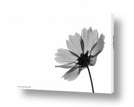 צילומים תמונות שחור לבן | שקוף