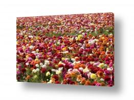 צילומים מופשט | פרחים פרחים