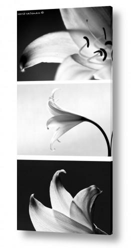 צילומים שרית סלימן | Triptych-1