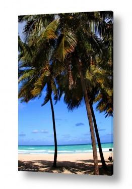 נוף חופים | חוף קסום קובה