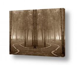 צילומים עירוני | יער קסום