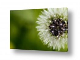 תמונות לפי נושאים מדשאות | ירוק מסביב
