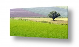 צילומים צילום פנורמי | שכבות צבע