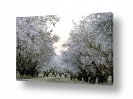 תמונות לפי נושאים צבעים חיים | לבן