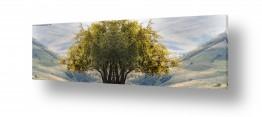צילומים ארץ ישראלי | נוף צפוני