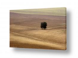 נוף חול | משטחים
