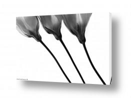 צילומים תמונות שחור לבן | מנורת שולחן