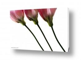 נושאים תמונות נופים נוף | מנורת שולחן צבעונית