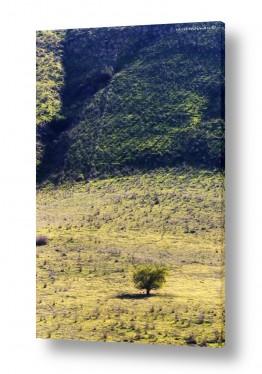 שטיח טבעי