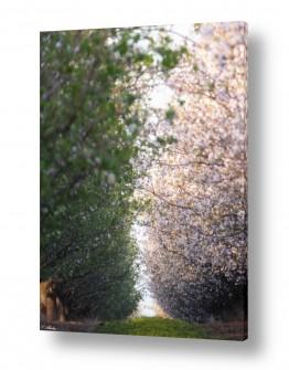 צמחים עץ | צפוף